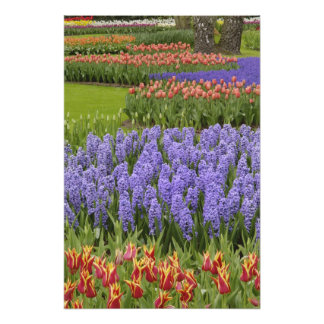 Jardín del tulipán y del jacinto, jardines de Keuk Fotografías