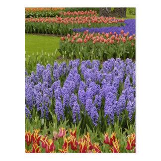 Jardín del tulipán y del jacinto, jardines de tarjeta postal