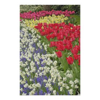 Jardín del tulipán y del narciso, jardines de Keuk Cojinete