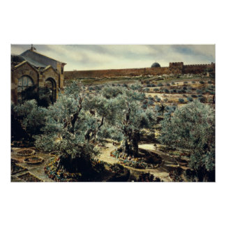 Jardín del vintage de Gethsemane Jerusalén Israel Poster