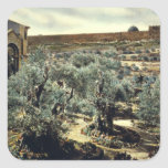 Jardín del vintage de Gethsemane Jerusalén Israel Calcomanía Cuadrada Personalizada