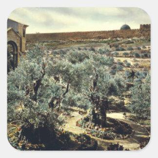 Jardín del vintage de Gethsemane Jerusalén Israel Pegatina Cuadrada