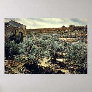 Jardín del vintage de Gethsemane Jerusalén Israel Póster
