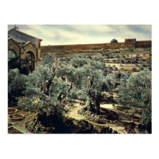Jardín del vintage de Gethsemane Jerusalén Israel Tarjeta Postal
