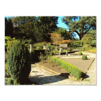 Jardín en la colonia de grajos, campo común de Str Impresiones Fotograficas