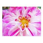 Jardín floral de la dalia de las postales blancas