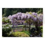 Jardín japonés felicitacion