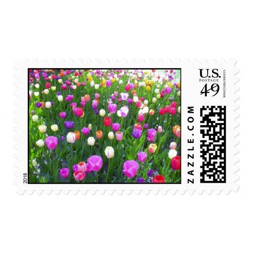 Jardín mezclado de restauración del tulipán sellos