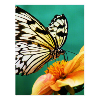 jardín moderno de la mariposa del vintage tarjeta postal