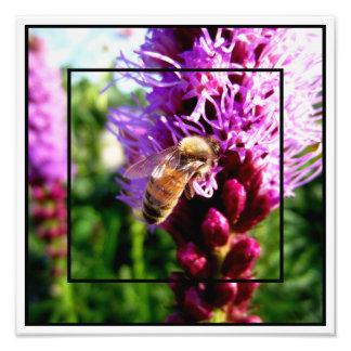 """""""Jardín montañas rocosas de la abeja de la Fotografias"""