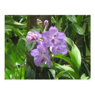 Jardín nacional de la orquídea, Singapur Postales
