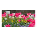 Jardín Photocard del tulipán Tarjetas Con Fotos Personalizadas