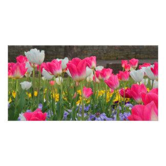 Jardín Photocard del tulipán Tarjeta Fotografica Personalizada