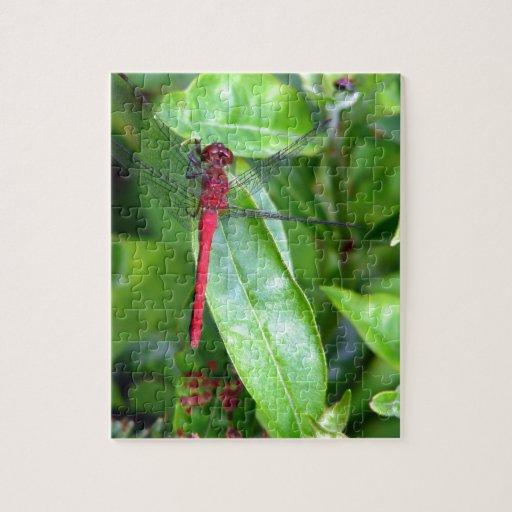 jardín rojo de la libélula puzzles con fotos