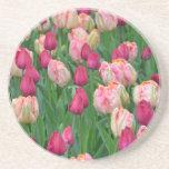 Jardín rosado de los tulipanes de la primavera posavasos cerveza