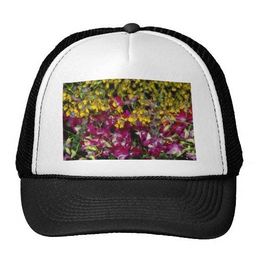Jardín rosado de orquídeas - Dendrobium y Oncidium Gorras