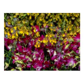 Jardín rosado de orquídeas - Dendrobium y Oncidium Postal
