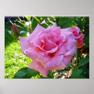 Jardín rosado subió impresiones