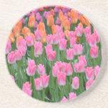Jardín rosado y anaranjado del tulipán posavasos personalizados