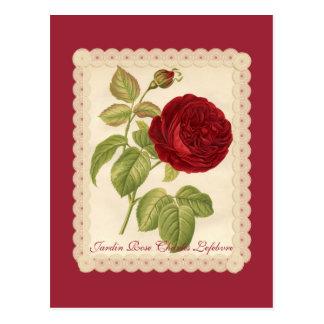 Jardin Rose Charles Lefebvre Postcard