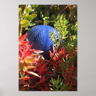 Jardín subacuático de la planta suculenta poster