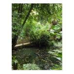 Jardín subtropical tarjetas postales