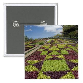 Jardines botánicos Funchal islas de Madeira Pin