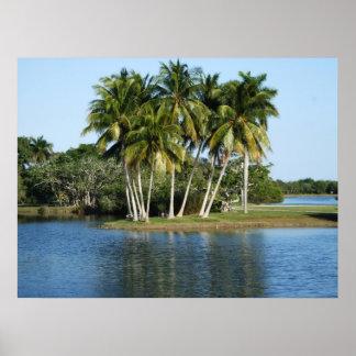 Jardines botánicos tropicales de Fairchild Posters