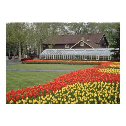 Jardines de Edward, tulipanes y flores rojos del i Anuncios Personalizados