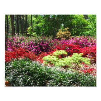 Jardines de la azalea impresión fotográfica