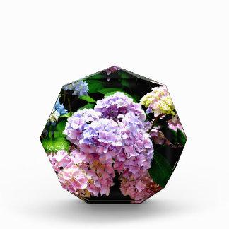 Jardines del Hydrangea