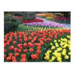 Jardines del tulipán postal