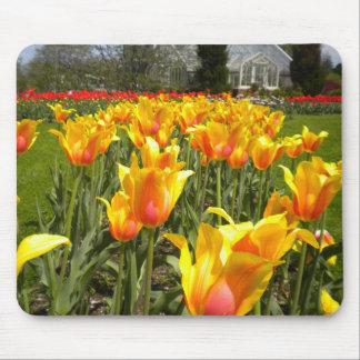 Jardines del tulipán mousepads