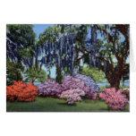Jardines Georgetown Carolina del Sur de la isla de Felicitaciones