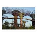 Jardines por la arboleda de Singapur Supertree de  Tarjetas Postales