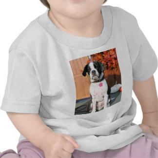 Jarno - Boston Terrier Hybrid Photo-2 T Shirts