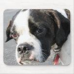 Jarno - híbrido Photo-1 de Boston Terrier Tapete De Ratón