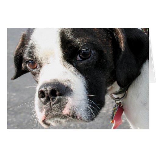 Jarno - híbrido Photo-1 de Boston Terrier Tarjeta De Felicitación