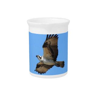 Jarra del pájaro de Osprey