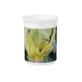Jarra rara de la orquídea