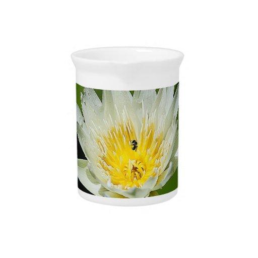 Jarras de la flor y de la abeja del lirio de agua