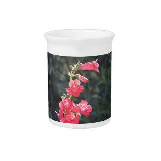 Jarro rosado Sunlit de la flor del Penstemon Jarras De Beber