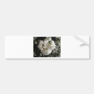 Jasmine Blossom. Car Bumper Sticker