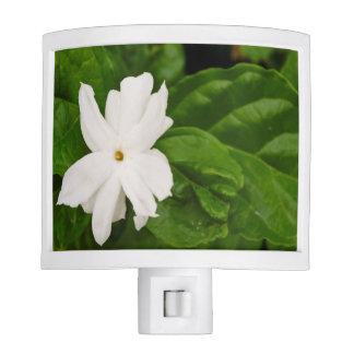Jasmine Flower Night Light