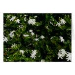 Jasmine Flowers Card