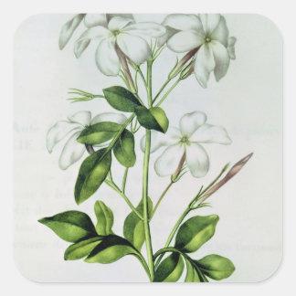 Jasmine, from 'La Guirlande de Julie' Square Sticker