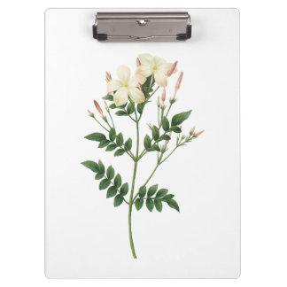 jasmine(Jasminum grandiflorum) by Redouté Clipboard