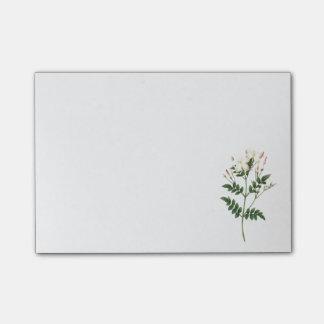 jasmine(Jasminum grandiflorum) by Redouté Post-it Notes