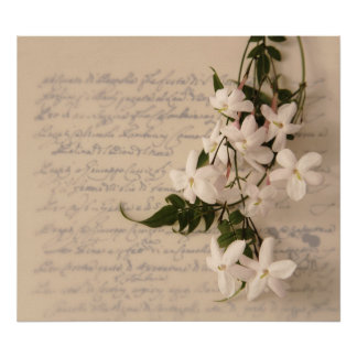 jasmine on old script handwriting poster large
