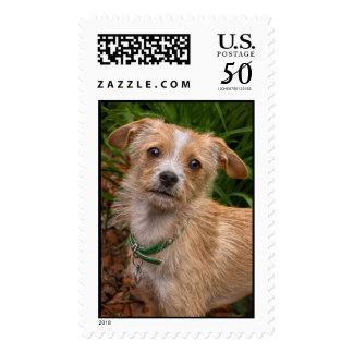 Jasmine Rescue Pup Postage